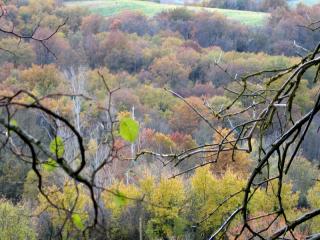 011_07déc05 automne au bois de Galembrun_416_418
