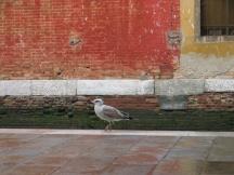 Venise, pescheria, 2007