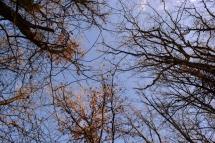 hiver en bleu