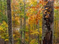 forêt d'Iraty_1510