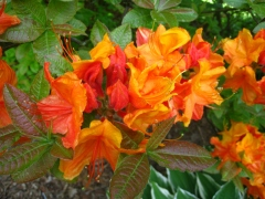 jardin botanique Glasgow_1634