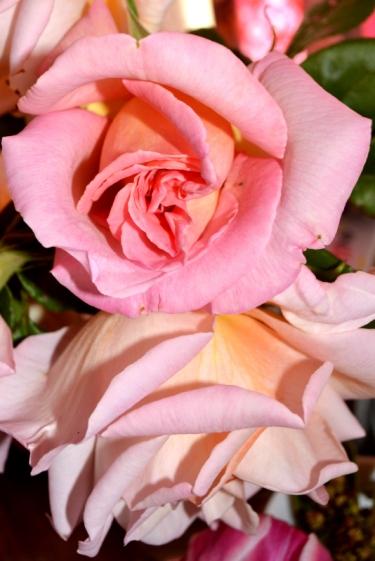 rose_2134