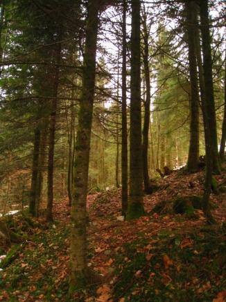 forêt Courvières_1965
