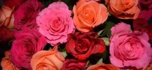 quarante roses_2150