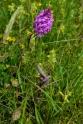 orchidées sauvages Galembrun_2616