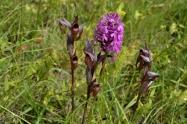 orchidées28mai14_2622