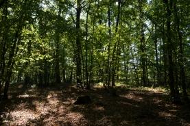 bois de Tourguil sept14_3842