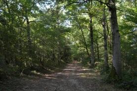 bois de Tourguil sept14_3844