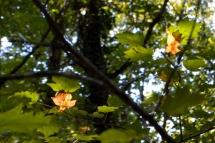 automne sept14_3845