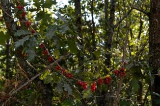 collier d'automne sept14_3848
