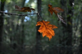 automne sept14_3858