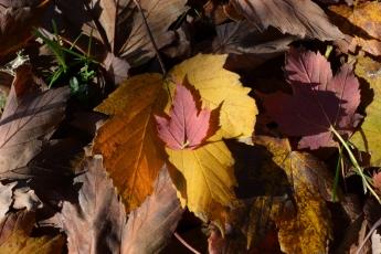 automne_4336