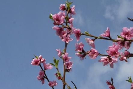 printemps_5566