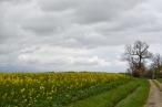 colza et nuages_5579