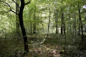 17mai_Compiègne forêt_6425