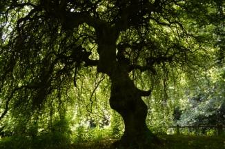 17mai_Compiègne forêt_6426