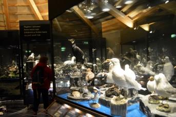 18juin15_Myvatn musée des oiseaux_7516