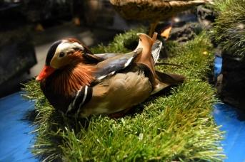 18juin15_Myvatn musée des oiseaux_7517