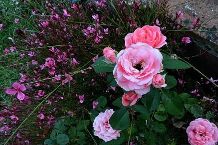 23août - en rose et vert