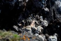 23juin15_falaise aux oiseaux de Svörtuloft_7969