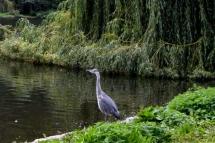 30août_St Jame's Park_8461