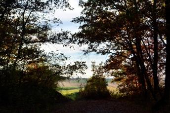 sortie du bois, vers les champs et le hameau