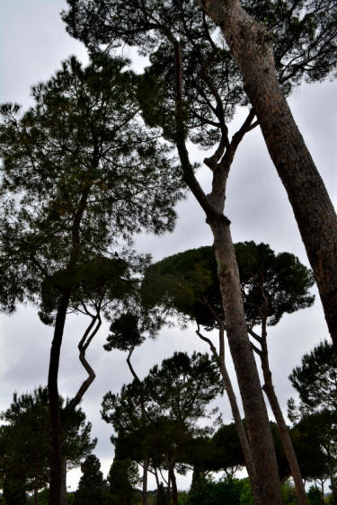 01_28avril_Villa Borghese les pins