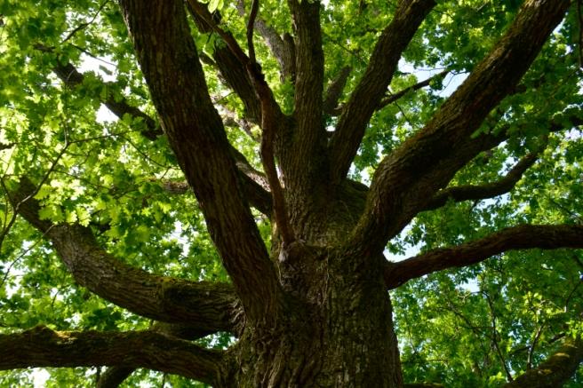 16mai_dans le bois de Tourguil