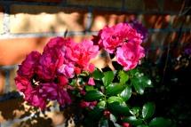 03oct16_rosier-buisson