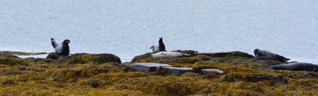 02sept17_fjords de l'ouest_7