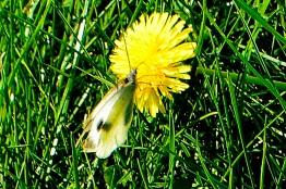 14oct17_Sur l'herbe