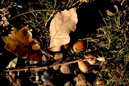 28octobre17_sous le chêne