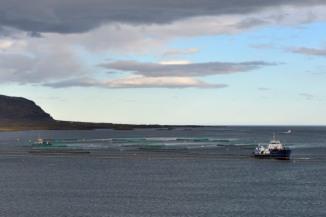 36_6sept17_les fjords de l'Est_élevage saumon