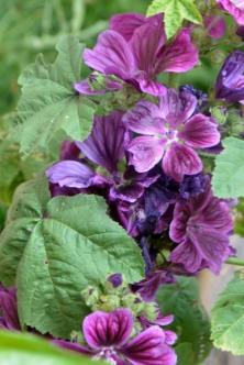 03juin18_RdV jardins Drudas_Chartreuse_46