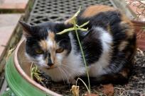 03juin18_RdV jardins Drudas_Chartreuse_47