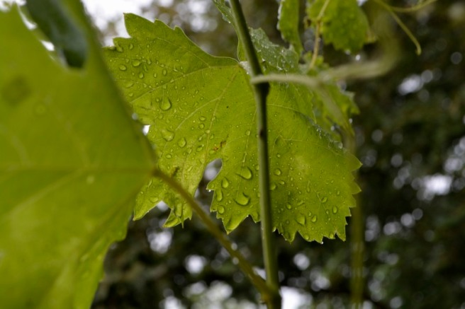 09_9août18_après la pluie