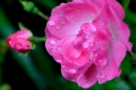 10_9août18_après la pluie