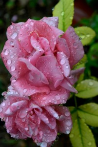 11_9août18_après la pluie