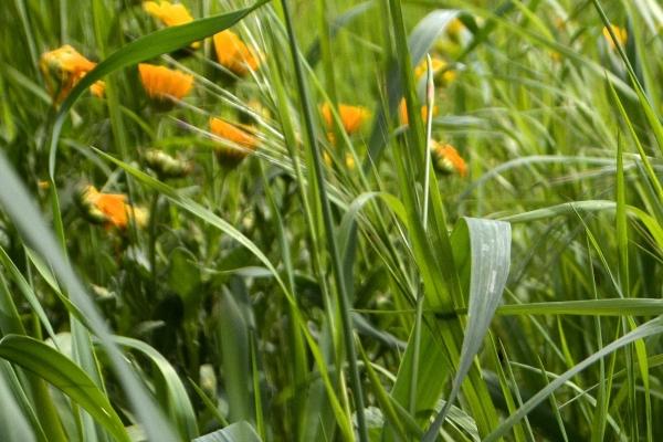 Prairies, haies, printemps encampagne