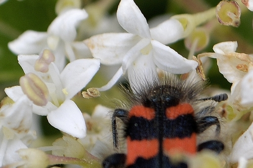 Insectes et graminées