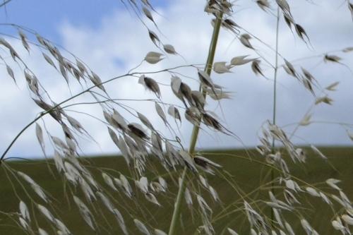 Nature en campagne